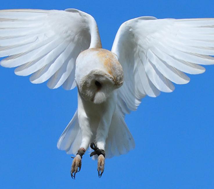 home-owl