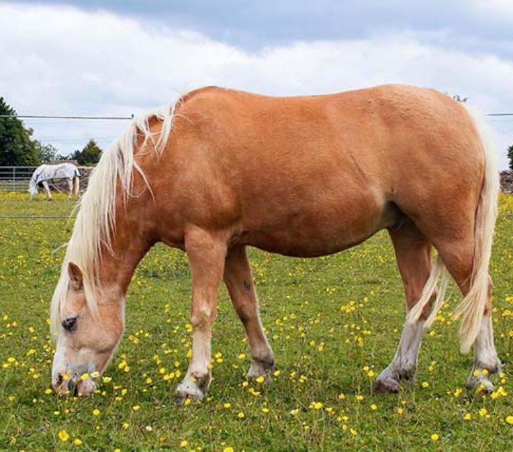horsebb